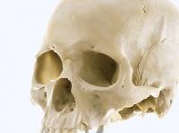 3D Scanned Human Skull (Octane render)